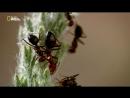 «Тайны дикой природы (3). Затерянные миры» (Познавательный, животные, 2013)