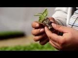 Выращивание рассады цветов. 2 серия