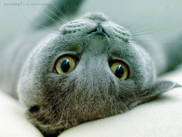 Почему кошки перенимают привычки и повадки хозяев?