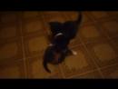 поединок котят
