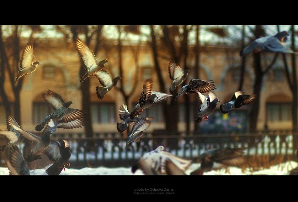Летите голуби,летите..