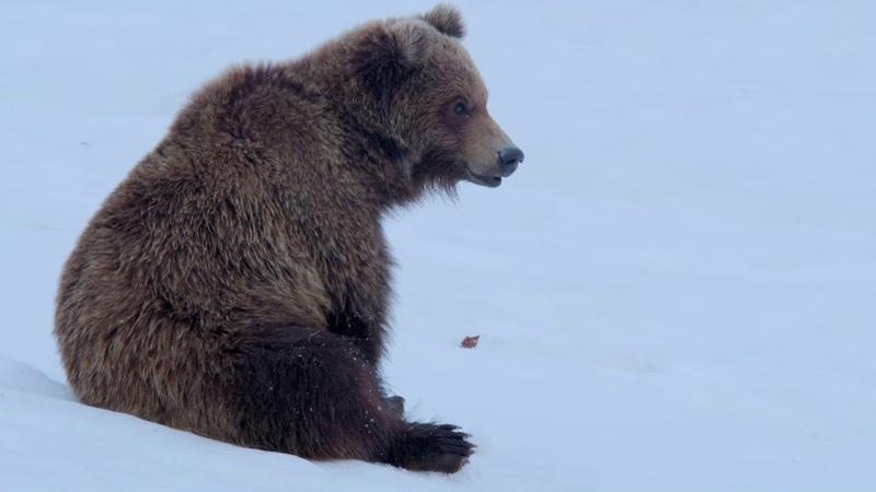 Новое Земля медведей 2018 BDRip 1080p