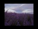Закат в лавандовом раю Крымский прованс Тайм лапс