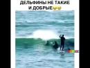 Дельфины пидары