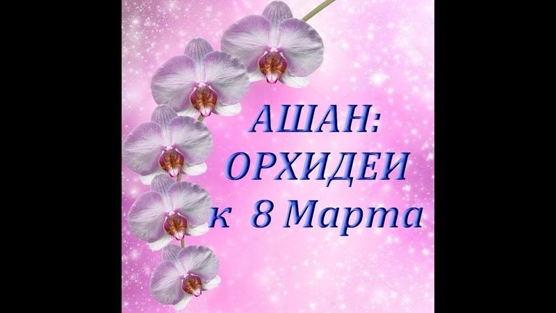 АШАН ОРХИДЕИ к 8 МАРТА,05.03.2019,ТЦ Космопорт,Самара.