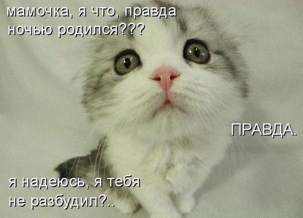 Смешные животные vk