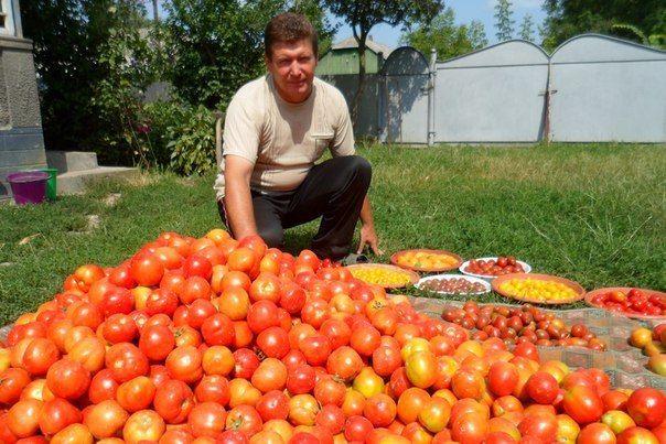Волшебный бальзам для роста помидоров от садовода-огородника Владимира Андриянина