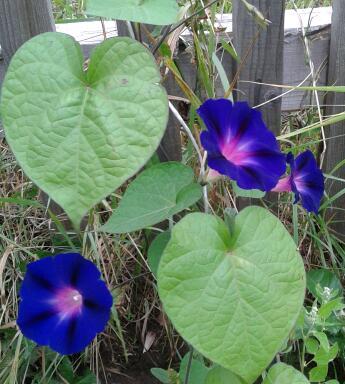 Цветы у Ликки Ry3TuoWucck