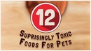 12 удивительно токсичных продуктов для животных / 12 Surprisingly Toxic Foods for Pets