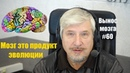 С В Савельев Мозг продукт эволюции Сергей Савельев Вынос мозга 60