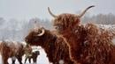 4 pory roku na farmie Szkockie Krowy - ZDJĘCIA