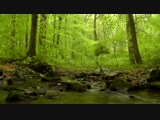 60 minutes of Woodland Ambiance (Nature Sounds Series #4) Trickling Stream Birds Sounds