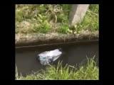 Ебучий голубь дрифтует в сраной луже