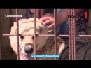 Жизнь отловленных собак