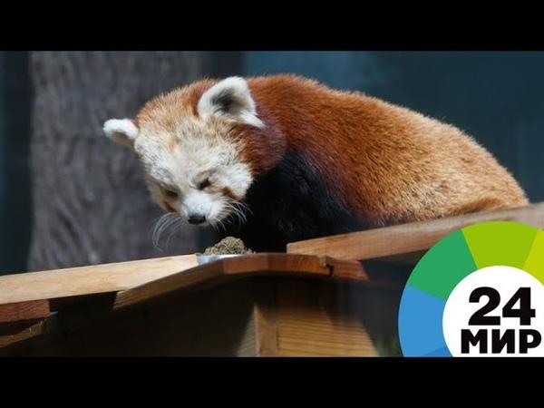 В Петербурге обитателей зоопарка спасают от жары ледяными тортами - МИР 24