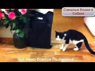 Кот и робот-пылесос. Неудачное знакомство...