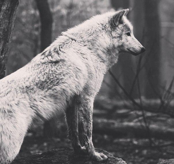 Тот, кто находит удовольствие в уединении, либо дикий зверь, либо Бог.
