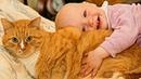 Рыжая кошка нашла подкидыша возле дома! Малыш лежал в свертке под забором и шевелился
