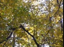 P1170786Ольга Крючкова в парке Кузьминки заканчивается октябрь