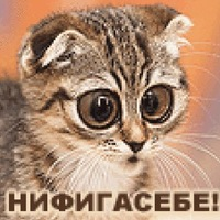 Александр Штаер, 14 июля 1984, Черновцы, id165671845