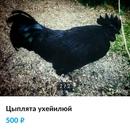 Юрий Ромашин фото #41