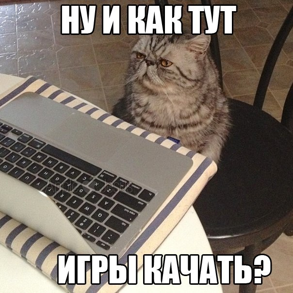 Кот PC-шник