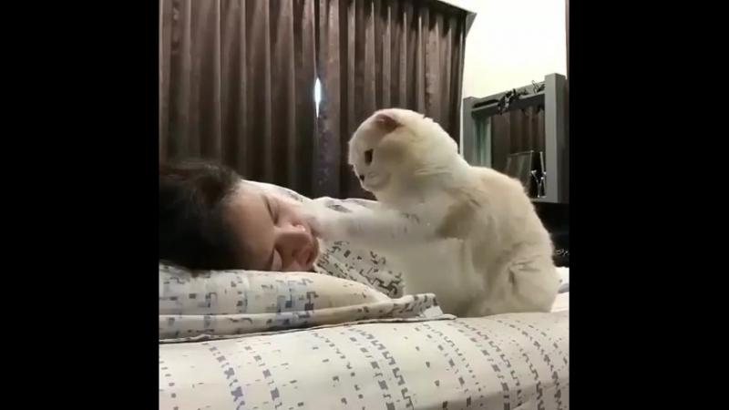 Мимимишный будильник