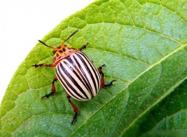 Уничтожители вредителей предотвращают заражение насекомыми