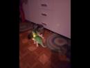 Динозавр и кошки