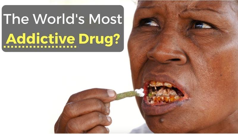 The World's Most Addictive Drug? (Betel Nut)