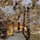 Диалог у новогодней елки