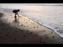 Притча Мальчик и морские звёзды читает Павел Беседин