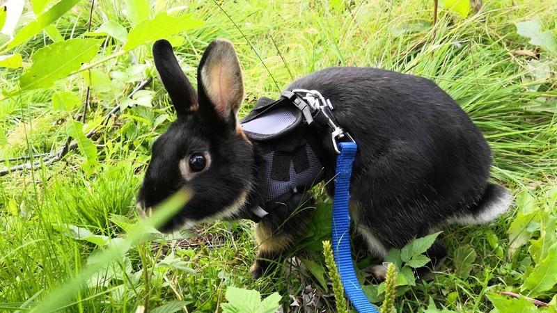 Кролик Эрни на прогулке