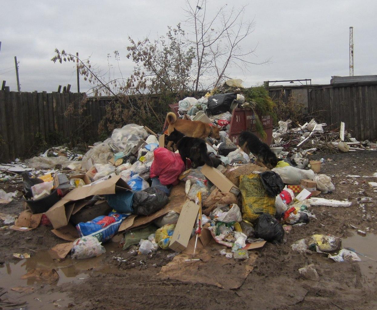Кировских застройщиков оштрафовали на 800 тысяч рублей за неубранный мусор