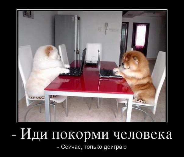 https://pp.userapi.com/c620021/v620021651/15563/PVPeUo8CNek.jpg