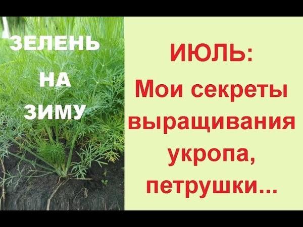Посадка укропа и петрушки в июле Зелень на зиму