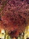 Самые красивые цветущие улицы мира