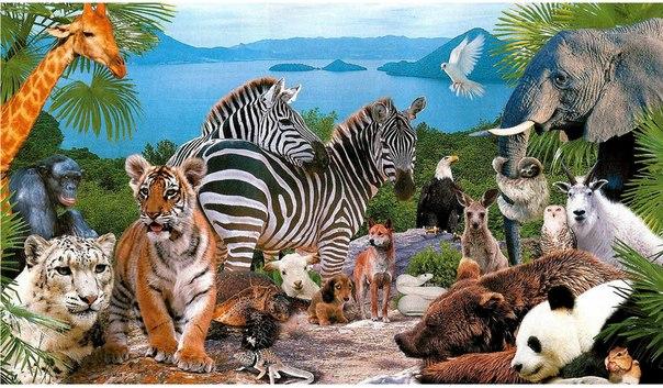 Мир вокруг нас -часть 2 (животные).