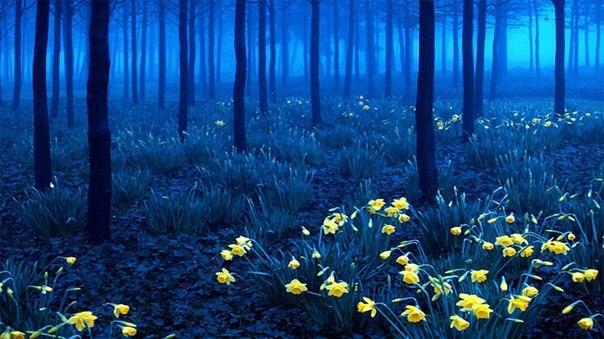 """""""Черный лес"""" в Германии"""