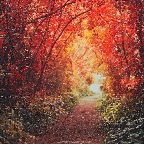 Шикарная прекрасная осень- рыжая подружка!