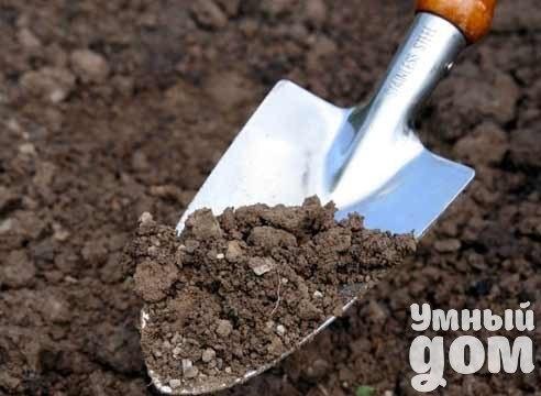 Как оздоровить и восстановить почву Почва на ваших земельных участках сада или огорода стала пылевидной и бесструктурной? После каждого дождика или полива появляется «корка»? Участились неурожаи? Всё это говорит о том, что почва «умирает» или безнадежно «больна». Что делать? Ответ один: срочно проводить «реанимацию» почвы и ее «лечение». Но сначала разберемся: кто довел нашу Матушку-Землю до такого плачевного состояния своим неумелым с ней обращением? Мы и довели. Значит, с нас и начинать…