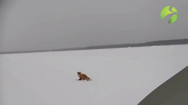 рыжая подружка на зимнике