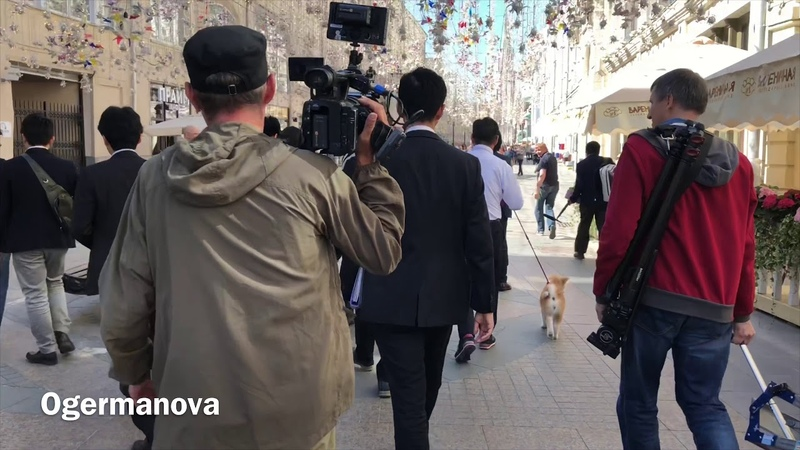 Akita Inu. Masaru's sidewalk Around Kremlin. For Alina Zagitova. Акита Ину Масару