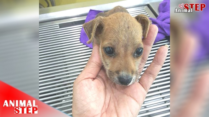 Poor Puppy with Injured almost Whole Body Getting Second Chance at Life