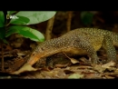 Дикая природа Индонезии 1. Потерянные миры Папуа Познавательный, природа, животные