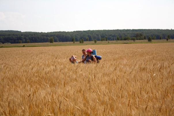 Маленького ярика почти по плечи скрывает высокая пшеница. Хорошо, что не полностью — а то потерялся бы=)