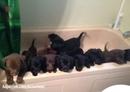 у друга 14 щенков, и когда он убирается дома, то сваливает их в кучу в ванной…