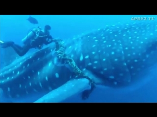 Но вместо этого морской великан осторожно потянул его за руку