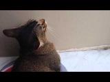 Республика кошек 12.08.14 Эрик манчкин