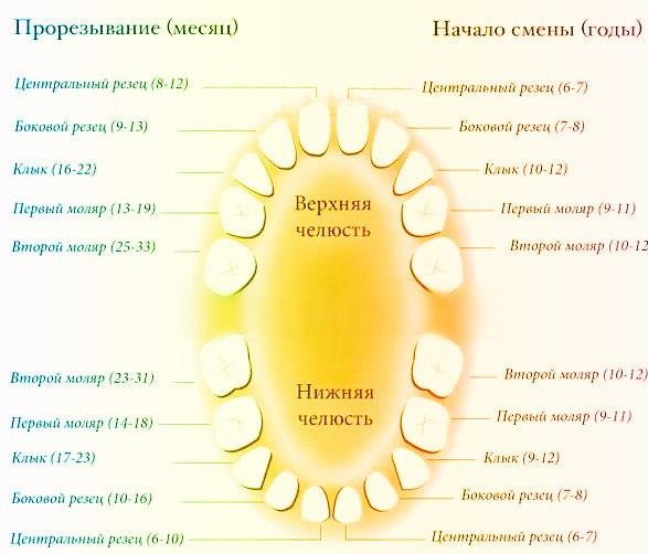Схема и таблица сроков